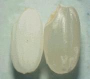 レーザ光で無洗米:(株)リプス・ワークス